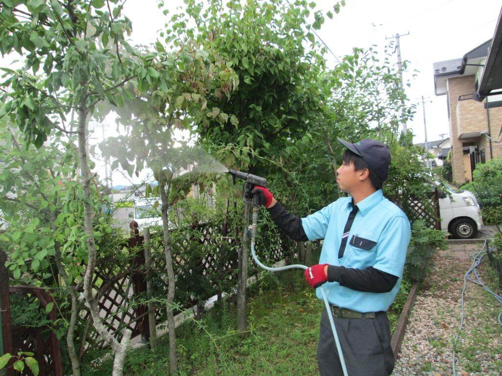 病害虫がいないか隈なく点検し、殺虫作業を行うトータルグリーンスタッフ
