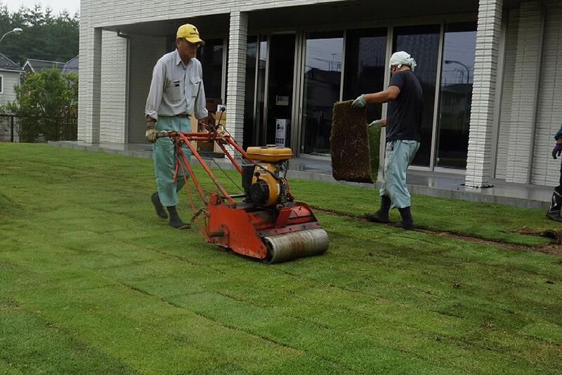 芝張り機を操縦して芝生を整えているベテラン作業員