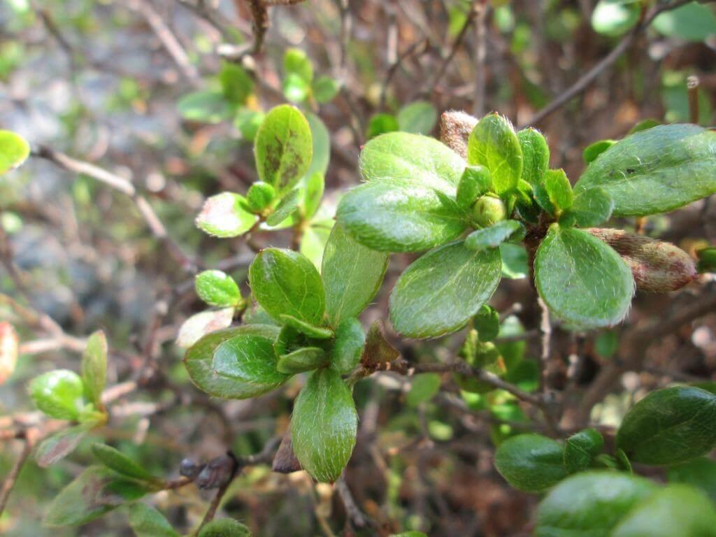春の芽吹きが感じられる庭木