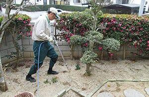 樹木に薬剤を注入するスタッフ