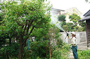 樹木に水を散布するスタッフ