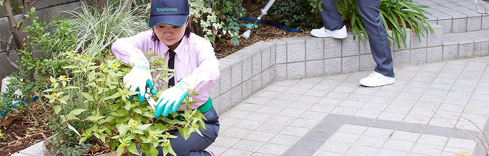 庭木の剪定を行うトータルグリーンの女性スタッフ