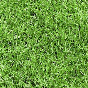 青々ときれいな芝