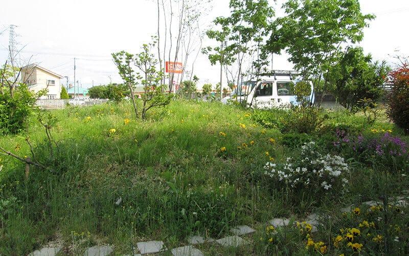 手入れされずに雑草が花咲いている芝生