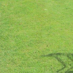 きれいに整えられた芝生