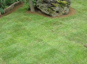 きれいに整えられた芝生の庭