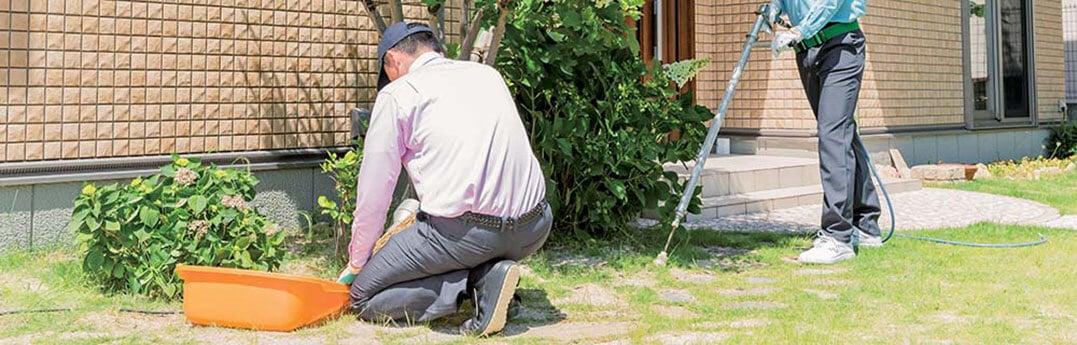 庭木のお手入れをするトータルグリーンのスタッフたち