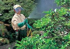 庭木に水をまくスタッフ