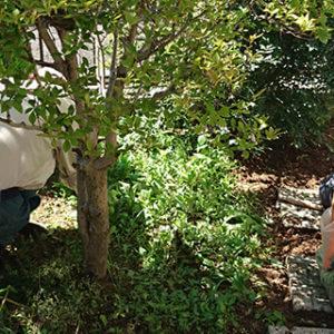 庭の雑草を手作業で除去するトータルグリーンのスタッフたち