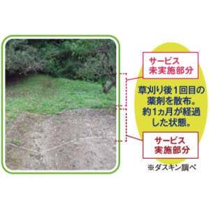 雑草防止の薬剤効果の比較