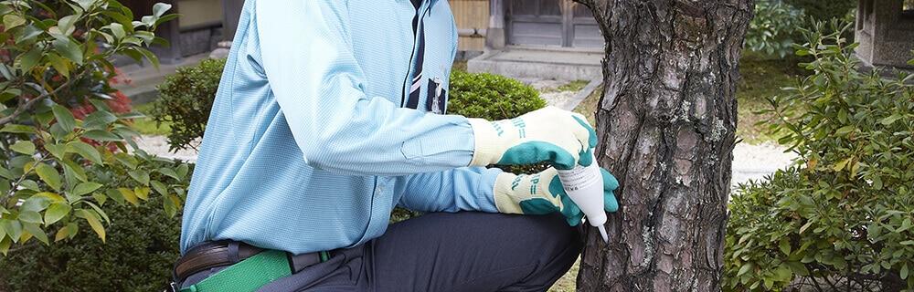 庭木に薬剤を注入するスタッフ