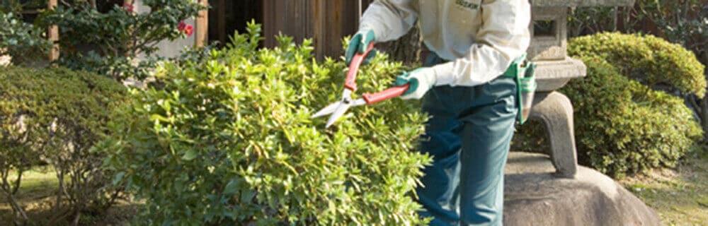 垣根を剪定しているスタッフ