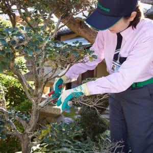 庭木の剪定を行う女性スタッフ