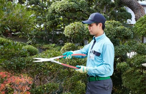 庭木を剪定するトータルグリーンのスタッフ