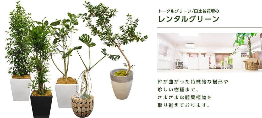 トータルグリーン ・日比谷花壇のレンタルグリーン