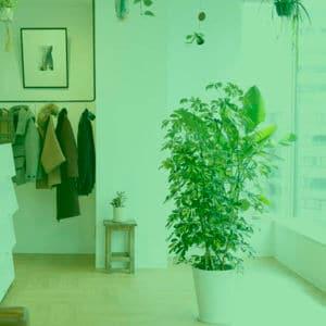 オフィスのレンタルグリーン