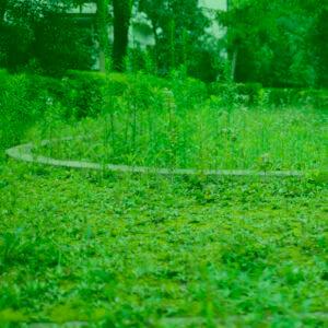 雑草が生え荒れた庭