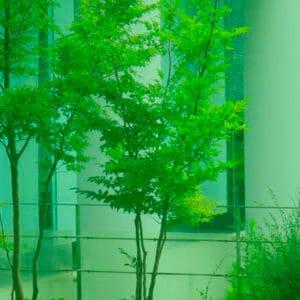 庭先の健康な樹木