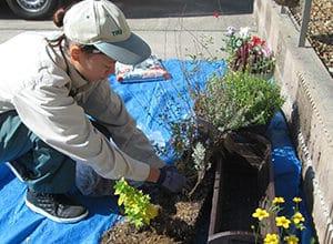 花壇をきれいに彩る花を植えるスタッフ