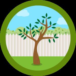 庭に一本だけ生えた木