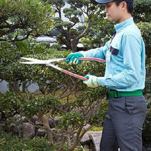 庭木の剪定を行うトータルグリーンのスタッフ