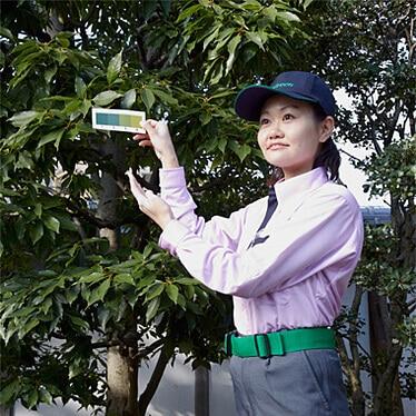 樹木の葉の色を検査するトータルグリーンの女性スタッフ