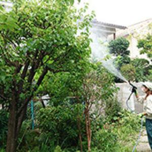 樹木に水をまくトータルグリーンのスタッフ