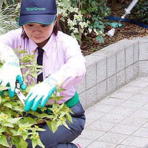 庭木を剪定する女性スタッフ