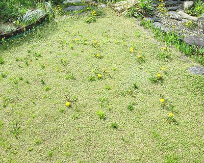 雑草が生え、荒れた芝生