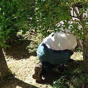 庭木を手入れするスタッフ