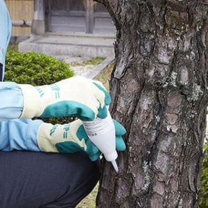 樹木に薬剤を注入するトータルグリーンのスタッフ