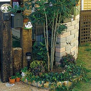 庭木が整えられた玄関先