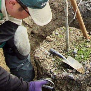 樹木の根を守る作業を行うトータルグリーンのスタッフ