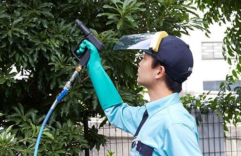 新芽の保護のために樹木に薬剤を散布するトータルグリーンのスタッフ