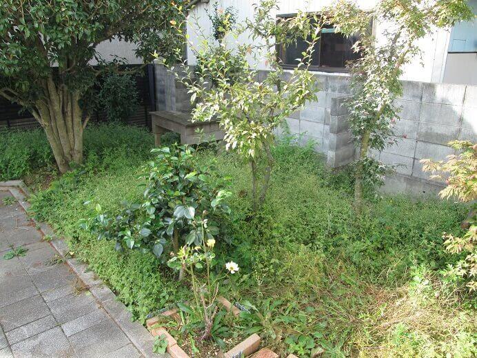 作業前の雑草まみれのお庭